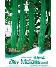 FD1388 Arris Luffa Seed Towel Gourd Luffa Cylindrica Roem Seed ~1 Pack 8 Seeds~