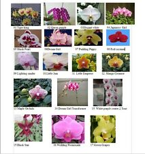 High Quality phalanaposis Orchids $ 14.99Farm Fresh