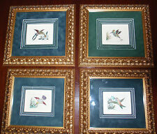 Dan Mitra 4 Different hummingbirds Original hand-colored etching and framed Bird