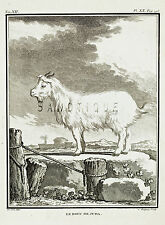 "De Seve's Animals (Buffon) - ""LE BOUC DE JUDA"" (GOAT) - Copper Engraving - 1760"