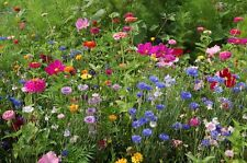 6,000 Wildflower Mix Seeds Pacific Northwest Wildflower BULK SEEDS
