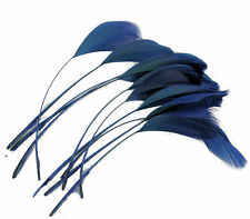 10 Deep Navy Blue Firm Stem Coque Feathers 16cms length - crafts,millinery,etc