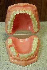Dentures Dental Student Tool False Teeth Missing Teeth Halloween Gag Prop