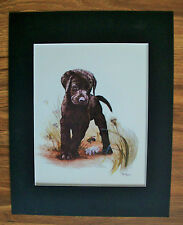 Print Black Lab Dog Tara Moore Pup Flight Of Bumblebee Bookplate 1982 11x14 Mat