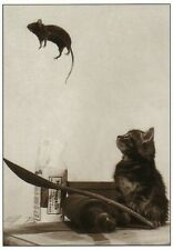 Postcard: Katze und Maus - Salto Mortale - cat and mouse - chat et sourrier