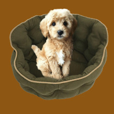 Pet Lounge, Dog Basket, Cat Bed, Day Bed. Quilted Corduroy  - Olive Green