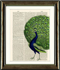 Old Antique Book page Art Print - Vintage Peacock2 Dictionary Page Print