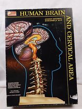50's 60's Vintage Renwal Human Brain & Cervical Area Boxed Life-Sized Model