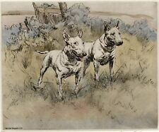 BULL TERRIER DOG LIMITED EDITION PRINT - DRY-POINT ENGRAVING - Henry Wilkinson