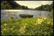 231054 Loch ARD Trossachs a4 foto stampa
