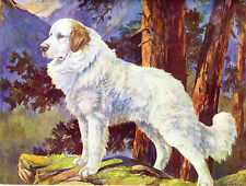 GREAT PYRENEES PYRENEAN MOUNTAIN DOG OLD 1934 SCOTT LANGLEY BOOKPLATE PRINT