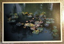 Carte postale Giverny hommage a Monet nympheas photo Batho John  postcard