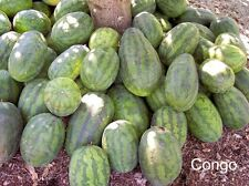 50 CONGO WATERMELON Red Citrullus Lanatus 40 lbs AAS Winner Fruit Melon Seeds