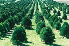 Tree Farming 30 Books CDROM Timber Harvesting Forestry Planting Pruning Logs