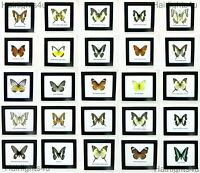 Real Framed Butterflies Butterfly Beautiful Taxidermy Frame Many Species