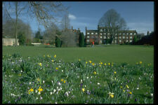 734057 The Paddock In Spring Emmanuel College Cambridge United Kingdom A4 Photo