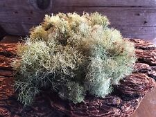 GREEN LICHEN MOSS FRESH DRIED FOR CRAFTS Model Train Forest Decor 2 Quarts