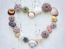 HEART SEASHELLS ROCKS WOOD BEACH LOVE MARITIME PHOTO ART PRINT POSTER BMP619A