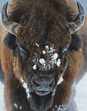 Winter Warrior by Terry Isaac, Bison Print 13x19
