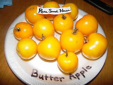 Rare Butter Apple Tomato! 10 Seeds! Over 200  kinds of tomatoes in our store!