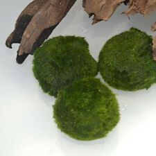"Marimo Moss Balls Small Size 1.25"" -3 pieces- Great for Beginners Low Light"