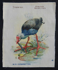 AFRICAN WATER HEN Birds of the Tropics Silk Card issued in 1913