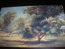 Antique Post Card Tuck's OILETTE Picturesque Egypt Cairo Gardens England Unused