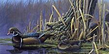"Tim Schultz Backwater Splendor"" Wood Duck Print SN 24"" x 12"""