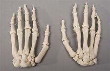 Halloween Horror Skeleton Hands Life-Size Human Skeleton, Left & Right, NEW