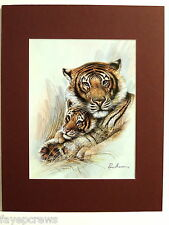 TIGER PICTURE CUB  BENGAL TIGER MATTED PRINT 11X14