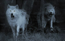 Framed Print - Terrifying Ghost Wolfs (Picture Poster Horror Gothic Animal Art)