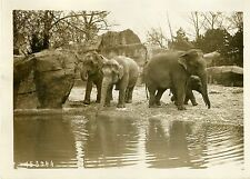 """ELEPHANTS (JARDIN ZOOLOGIQUE EXPO COLONIALE 31)"" Photo orig. G. DEVRED/Agce ROL"