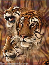 TIGERS HEADS - 3D MOVING PICTURE POSTER 300mm X 400mm (NEW)