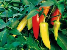 Hungarian Hot Wax Pepper, 300 seeds