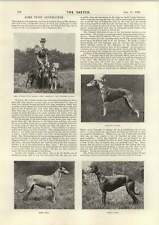 1898 Prize Greyhounds Four Walls Do Not A Prison Make Nor Iron Bars a Cage