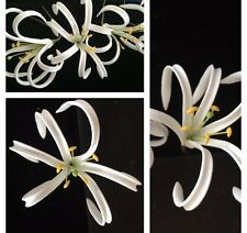 Hawaiian Foam Petals Spider Lily Flower PinUp Girl Wedding Luau Hair PICK WHITE