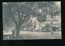 Gloucestershire Glos COMBE DINGLE old apple tree tea garden 1906 PPC
