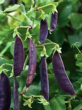 250 semi di PICCOLO PISELLI FAGIOLINI Shiraz / Blu Viola Orto Verdure