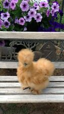 10+ Beautiful Bearded BUFF Silkie Chicken Hatching Chicken Eggs