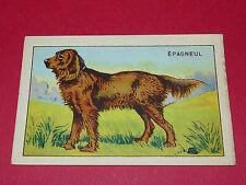1920-1930 CHROMO GRANDE IMAGE ECOLE BON-POINT ANIMAUX CHIEN EPAGNEUL DOG HUND