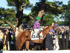 CALIFORNIA CHROME 8 by 10 PHOTO 2014  BELMONT STAKES PADDOCK HORSE RACING #5