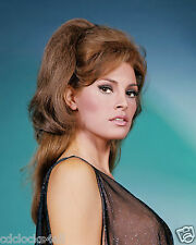 Raquel Welch 8 x 10 GLOSSY Photo Picture IMAGE #6