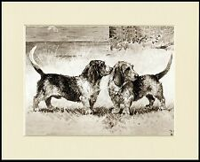 PETIT BASSET GRIFFON VENDEEN DOGS LOVELY DOG PRINT MOUNTED READY TO FRAME