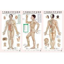Set of 3 Chart Men Acupoint Body Acupuncture Point Teaching Meridian Home/School