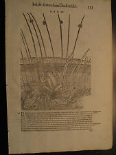 MATTHIOLI, 1500, PESCI, ITTICA,RANE, ROSPO, SILURO,  STAMPA ANTICA