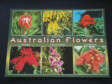 AUSTRALIAN FLOWERS PROTEA GOLDEN WATTLE WARATAH POINSETTIA ORCHID GUM POSTCARD