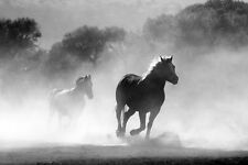 HORSES RUNNING IN MIST ANIMAL POSTER 24x36 HI RES