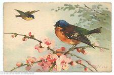 illustrateur . C. KLEIN . Oiseaux . Mésange . Rouge-Gorge . Birds
