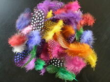 lot de 50 plumes pintade multicolore 5 a 8 cm