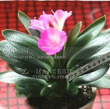 Pink Princess Clivia Flower Seeds (Kaffir Lily), Ideal Home Garden or Pot Flower